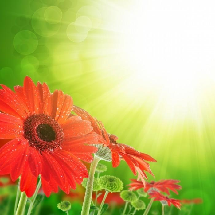 firestock flower 11102013 700x700 Красные цветы   Red flowers