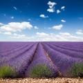 Лавандовая долина - Lavender valley