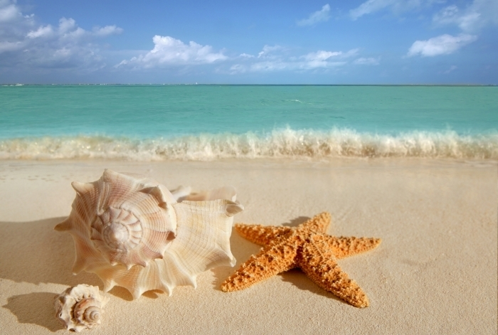 firestock sand 28102013 Морская звезда   Starfish