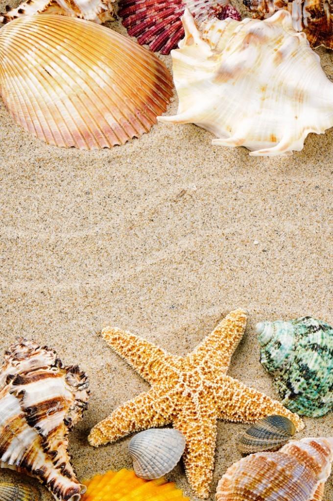 firestock sand star 11102013 680x1024 Песок с ракушками   Sand with shells