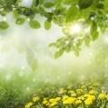 Весенний пейзаж природы - Spring landscape of nature