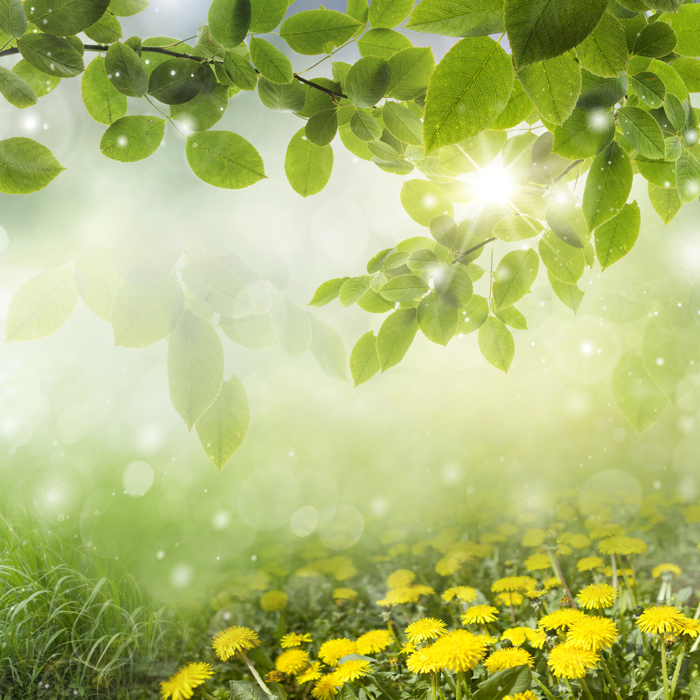 Фото крокусы цветы картинки весенние крокусы фотографии