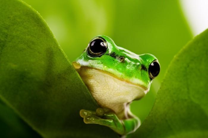 shutterstock 10417243 Лягушка   Frog