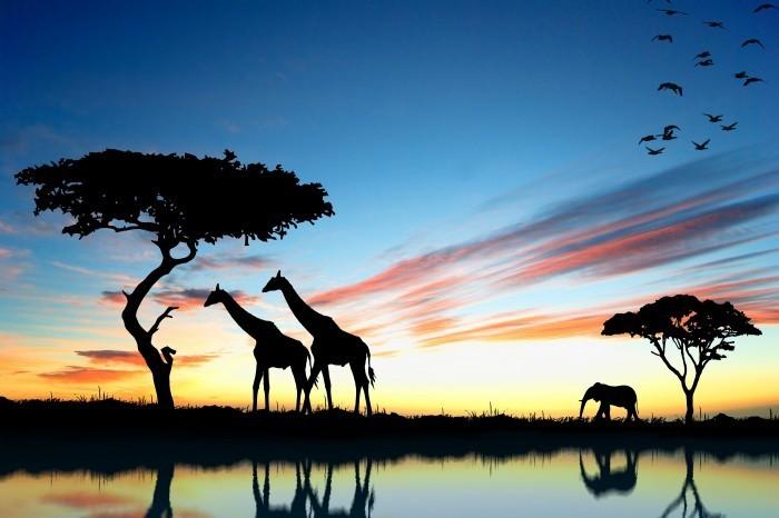 shutterstock 70057171 Жирафы и слоны на фоне природы   Giraffes and elephants on a background of nature