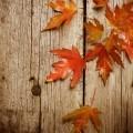 Осень - Аutumn