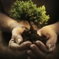 Дерево в руках - Tree in hands
