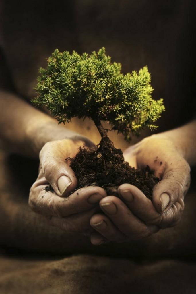 tree Istock.180213708 std 683x1024 Дерево в руках   Tree in hands