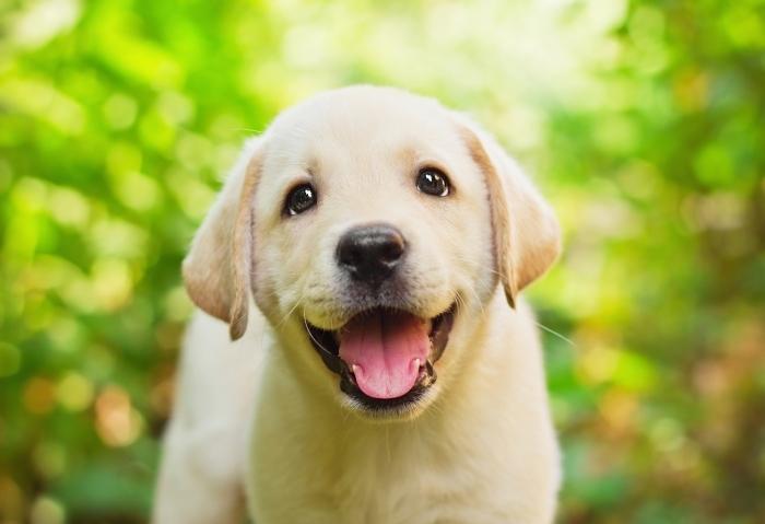 Depositphotos 10214337 original Собака   Dog