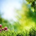 Природа - Nature