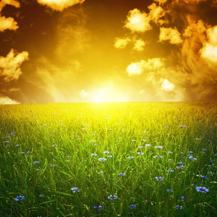 firestock sunset grass 21112013 700x700 Закат на траве   Sunset on the grass