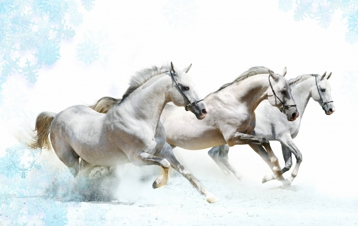 winter horses Белые лошади   White horses