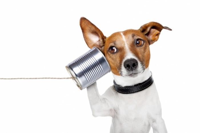 photodune 2602459 700x466 Собака с жестяной банкой   Dog with cans