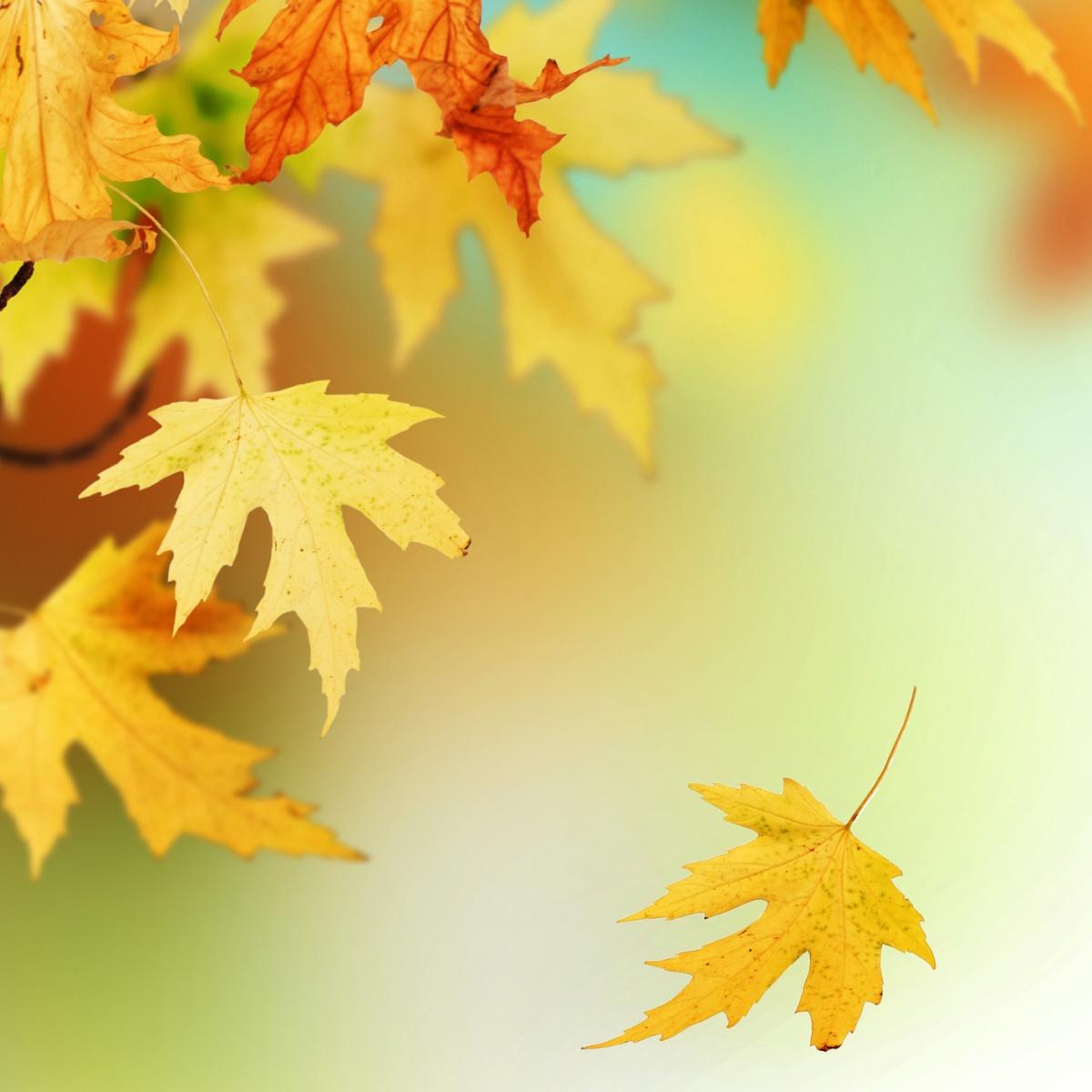 Фото девушка осень листья