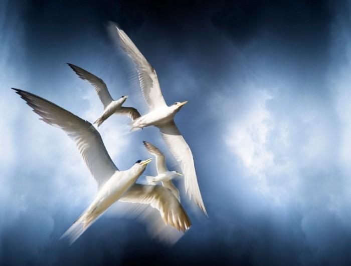 photodune 2266633 700x531 Птицы в небе   Birds in the sky
