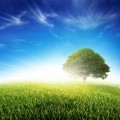 Свежий зеленый луг - Fresh Green Meadow