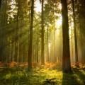 Прогулка по лесу - Forest Walk