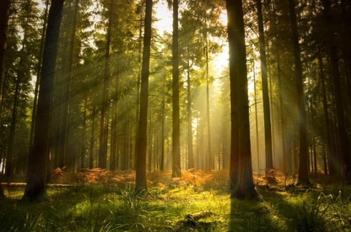 photodune 514835 700x463 Прогулка по лесу   Forest Walk