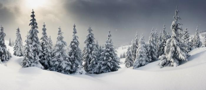 photodune 6090450 700x308 Зимняя красота   Winter Beauty