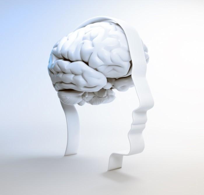 1988 Fotolia 51102943 M 700x671 Мозг   Brain