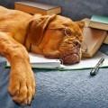 Собака в очках - Dog with glasses