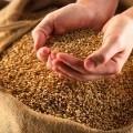 Пшеница в мешке - Wheat in the bag