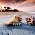 Ракушки на берегу - Seashells on the shore