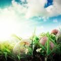 Пасхальные яйца в траве - Easter eggs in the grass