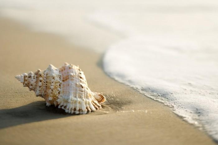 fotolia 2985024 m 700x466 Ракушка на берегу   Shell on the shore