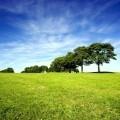 Деревья на лугу - Trees on meadow