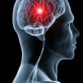 Мозг - Brain