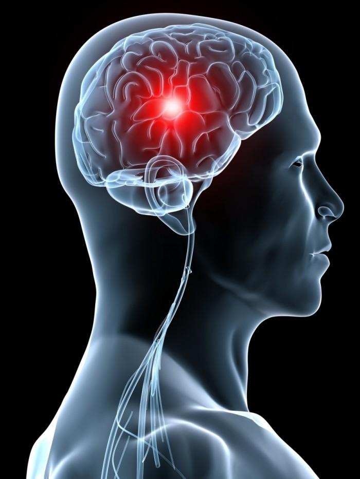 Fotolia 12813002 M 700x933 Мозг   Brain