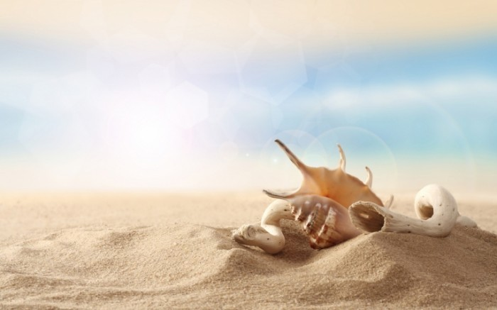 seashell in sand 2560x1600 700x437 Ракушки на песке   Seashells on the sand