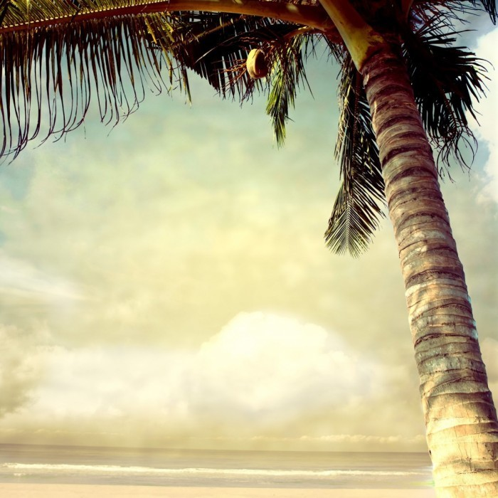 shutterstock 111165527 700x700 Пальма   Palm