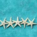 Морские звездочки - Sea Stars
