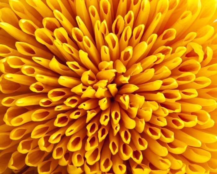 shutterstock 64636192 700x560 Желтый цветок   Yellow flower