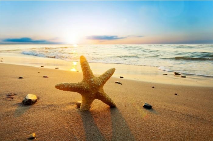 beachstarfish 700x464 Морская звезда   Starfish