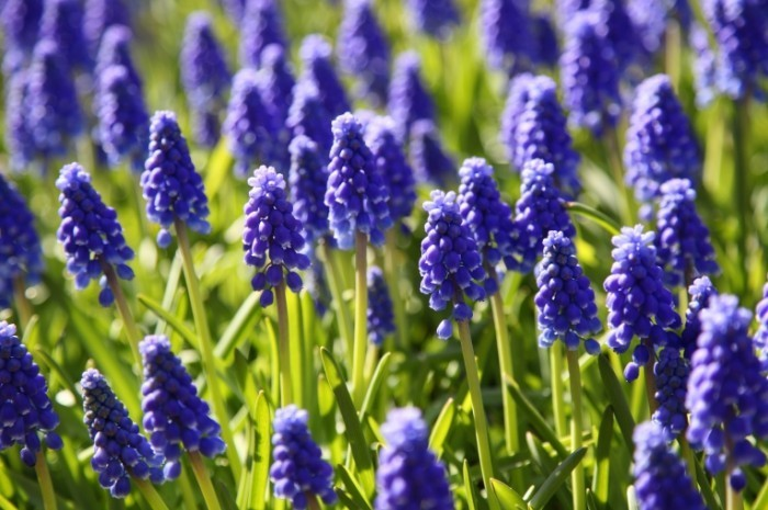 fotolia 41450744 subscription monthly xxl2 700x465 Цветы   Flowers