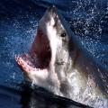 Пасть акулы - Shark jaws