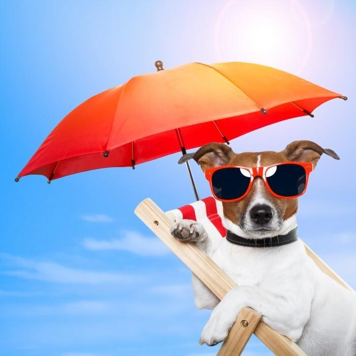 shutterstock 107301611 700x700 Собака под зонтом   Dog under an umbrella