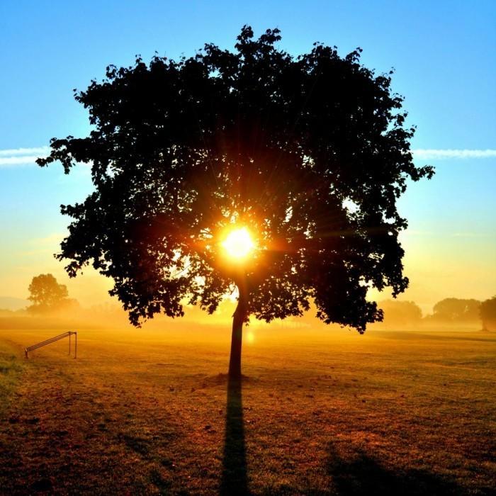 shutterstock 62713336 700x700 Дерево на закате   Tree at sunset