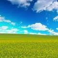 Красивое поле - Beautiful field