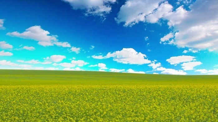 stock footage summer landscape k full hd x 700x393 Красивое поле   Beautiful field