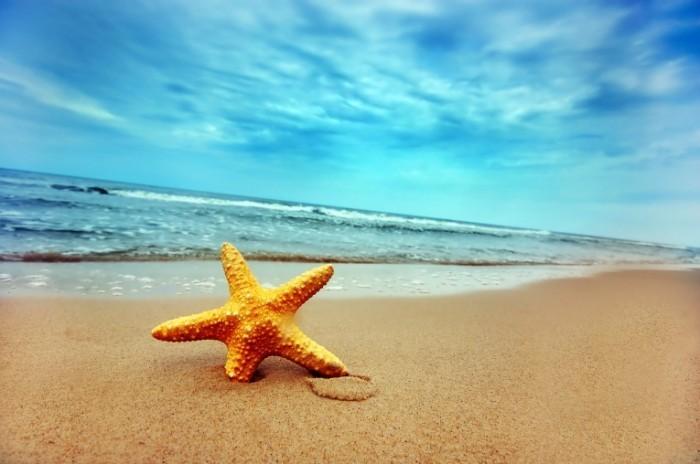 20111102020916122 700x464 Морская звезда на берегу   Starfish on the shore