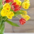 Тюльпаны - Tulips