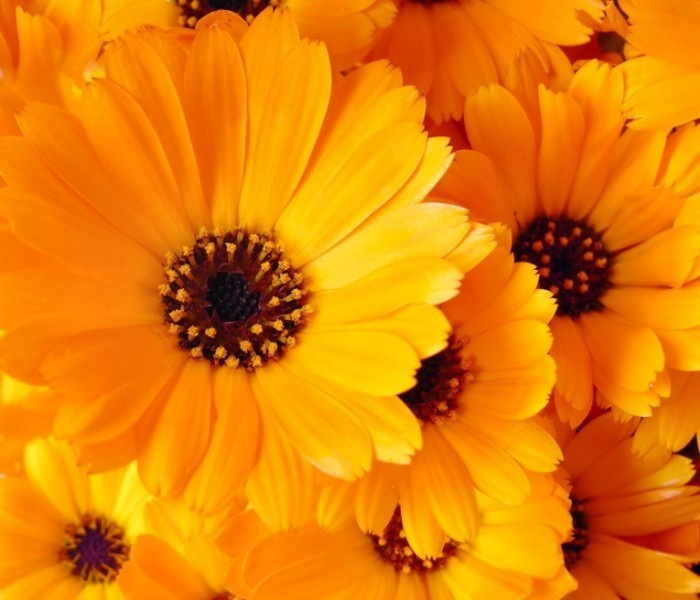 картинки цветы оранжевые