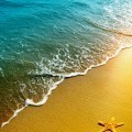 Морские звезды на берегу - Starfish on the shore