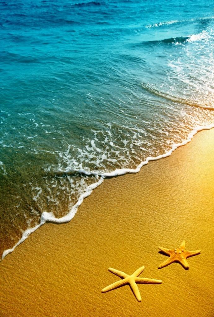 Fotolia 34962443 XXL1 690x1024 Морские звезды на берегу   Starfish on the shore