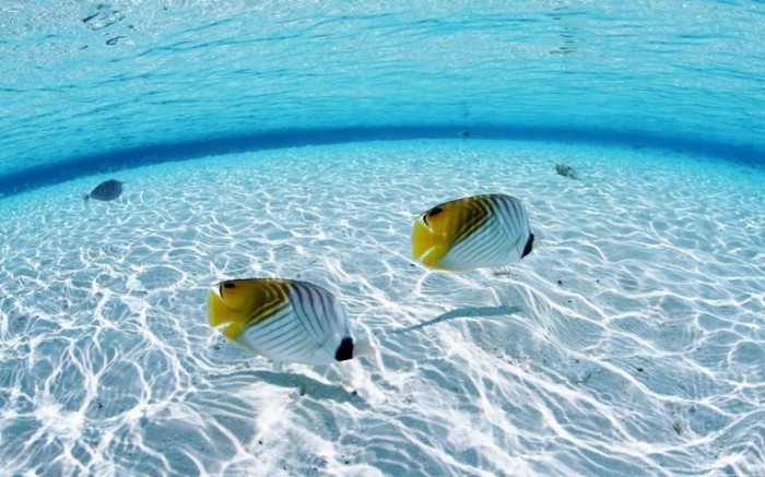 Underwater On The Sea HD Wallpaper 700x437 Рыбки в воде   Fishes in the water