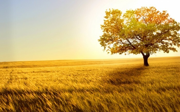 beautiful images of nature with quotes 2 700x437 Дерево в поле  Tree in field