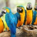 Попугай - Рarrot